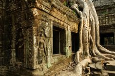 Ta Prohm is the jungle temple in Angkor.  Very cool!