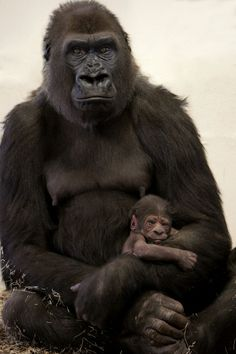 Como Zoo In Minnesota Is Thrilled To Announce The Addition Of A Baby Western
