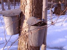 "Sap Buckets-Come and  Experience ""Sugaring"" at Shearer Hill Farm Bed & Breakfast-Springtime."