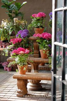 Beautiful containers! You don't have to have a lot of land to have gorgeous flowers!