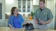 Animal Care Center Orlando, Busch Gardens Tampa Bay, Animal Care, Pet Care, Animales