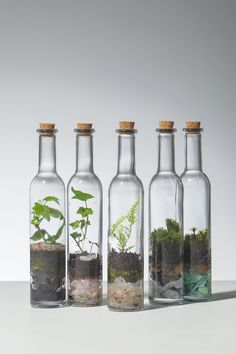 used glass bottles terrarium - Diyprojectgarden.ml - used glass bottles terrarium hand - Terrariums Diy, Bottle Terrarium, How To Make Terrariums, Bottle Garden, Garden Terrarium, Succulents Garden, Garden Plants, Indoor Plants, Planting Flowers