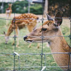 Deer Netting, Motion Activated Sprinkler, Laurel Hedge, Deer Repellant, Diy Garden Bed, Garden Ideas, Deer Fence, Sense Of Sight, Mother Earth News