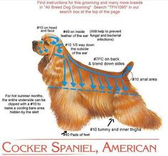 How to trim your Cocker Spaniel