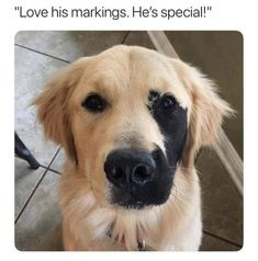 Animal Memes You're Going To Love - 40 Memes