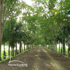 Bienvenidos a las #HaciendasFranciaYLusitania #Montería #Ganadería #Colombia #Pasion @asocebu @fedegan