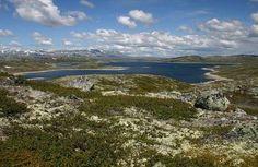 hardangervidda noorwegen hoogvlakte bezienswaardigheid.jpg (455×295)