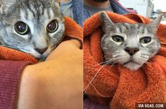 Before and after the vet visit