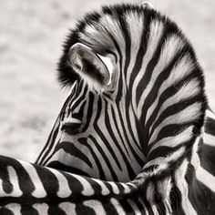 Wow!  Beautiful photo! Love the abstract curved shape in the lines.
