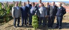 Alanya L Tipi Cezaevi'nde 7 ton muz hasadı