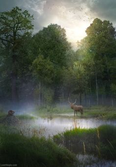 Beautiful Nature photography rabbit nature trees forest fog wild moose