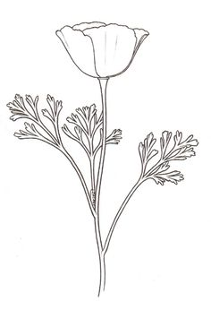california poppy line drawing - Google Search
