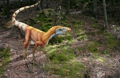 Sinosauropteryx was a theropod dinosaur that had simple bristles -- precursors of feathers -- in alternate orange and white rings down its tail.