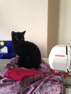 How was your #throwbackthursday? Here we're working on a #retro #dress pattern with Chica the #blackcat help! Now listen to #throwback music!  #tbt #tbtig #style #selfie #stockbridge #edinburgh #scotland #blessed #cats #blackcats #catsofinstagram #catsofpinterest
