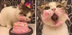 When you realize cake can solve pretty much any problem you have