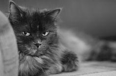 Долго ли кошки помнят обиду