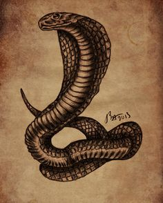 Cobra Tattoo Outline Cobra-tattoo (sketch) by