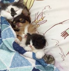 Precious Family of Pets Get Tucked in for the Night