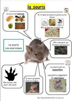 Education 283163895294530505 - L'invasion continue Source by Preschool Science, Life Science, Science And Nature, Animal Articles, Core French, French Education, French Classroom, Post Animal, Animal Habitats
