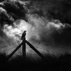 Artist: @christoph.hessel #pr0ject_uno #s0mbrebw #instagram #photography #bnw #blackandwhite #scenery #crow #bird #clouds #fence #wire #grass