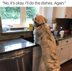 Funny Animal Pictures Of The Day – 23 Pics - Funny Pictures - # Funny Dog Images, Funny Animal Pictures, Dog Pictures, Funny Dogs, Animal Pics, Animal Quotes, Funny Animal Memes, Dog Memes, Funny Animals