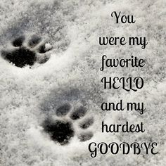 Ideas for rip pet quotes cat rainbow bridge Pet Quotes Cat, Animal Quotes, I Love Dogs, Puppy Love, Dog Heaven Quotes, Dog In Heaven, Miss My Dog, Pet Loss Grief, Dog Poems
