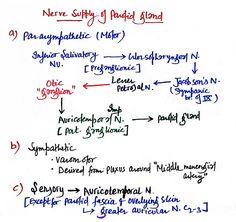 Imp overview of nerve of wrisberg chorda tympani for Motor supply co menu
