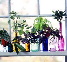 Windowsill Gardens! What plants can you easily grow inside?