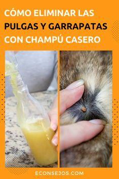 Como Acabar Con Las Pulgas En La Yarda Elimine Las Pulgas Y Garrapatas De Su Mascota Con Un Champu Casero
