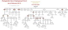 Phylogenetic tree of haplogroup R1b-L2 (Y-DNA) - Eupedia