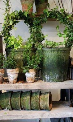 Garden Shop, Garden Pots, Potted Garden, Small Gardens, Outdoor Gardens, Bloom Where You Are Planted, Terracota, Garden Styles, Garden Inspiration