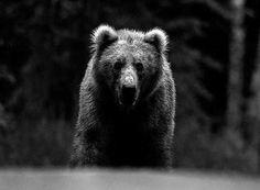 Black and White Wildlife Animals by David Yarrow