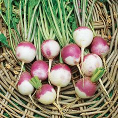 Growing Turnips for a Comeback - Garden - GRIT Magazine