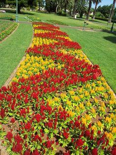Flower Crafts - Carnival of flowers 2011 Garden Crafts, Garden Art, Garden Design, Front Garden Landscape, Landscape Design, Ground Cover Plants, Most Beautiful Gardens, Colorful Plants, Formal Gardens