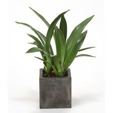 Silk Orchid Blades Desk Top Plant in Planter