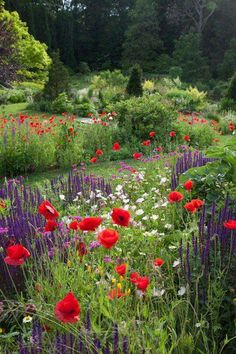 Beautiful Flower Garden!!! Bebe'!!! Great for native animals!!!