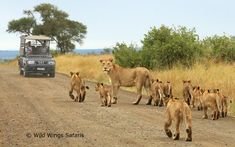 Cultural Vibes is a prominent tour operating agency that provides ample tour packages to Victoria Falls. They also offer guided tour of Victoria Falls. Cairo, Alexandria, Kruger National Park Safari, Wilderness Trail, Best Short Stories, Hunting Humor, Funny Hunting, Animal Attack, Wildlife Safari