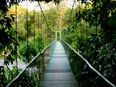 18 Costa Rica La Selva Ideas Study Abroad Duke University Abroad