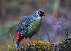 animales cubriendoce de la lluvia - Buscar con Google