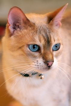 """""""If you are worthy of its affection, a cat will be your friend, but never your slave."""" --Theophile Gautier"""