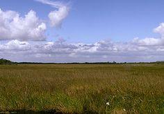 The Burmese Python Roundup In The Florida Everglades