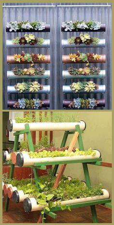 legumes em estrutura simples de madeira e Canos PVC...