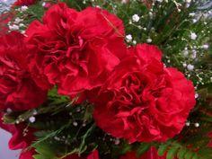 Convidamos você a descobrir o significado de algumas conhecidas flores dos nossos jardins!