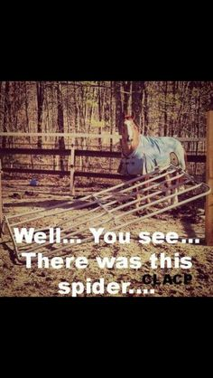 Horse humor, horse afraid of the spider.