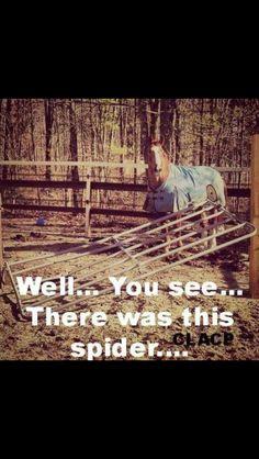 Horse humor, horse afraid of the spider. Funny Horse Memes, Funny Horses, Horse Humor, Funny Animal Memes, Funny Animals, Cute Animals, Horse Girl Problems, Pretty Horses, Cute Horses