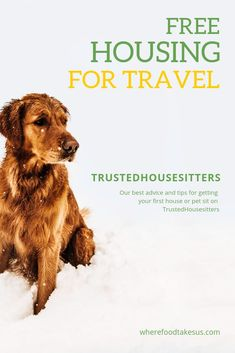 Re-pinned by #ontheroadkiwis. Looking for the cheapest way to travel? Try Trusted Housesitters! With house sitting opportunities all over the world, you can find FREE housing and make a furry friend! #housesitting #travel I Want To Travel, Ways To Travel, Travel Advice, Travel Guides, Travel Tips, Travel Hacks, Travel Info, Travel Stuff, Work Travel