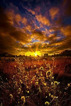 Texas sunset over some sunflowers