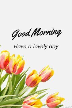 Good Morning Have A Nice Day Pics Good Morning Photos Good