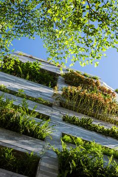 Garden House by Ho Khue Architects (2)