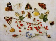 Still Life with Butterflies, Moths and Redcurrants by Jan van Kessel the Younger 1680